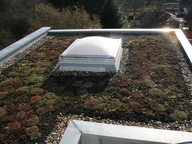 Flachdach mit Dachbegrünung